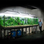 Зависимость размера рыбок от размера аквариума