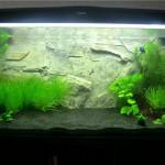 Продолжительность светового дня в аквариуме