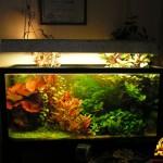 Освещение в аквариуме своими руками — как выбрать лампу