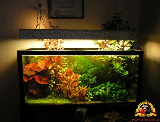 Металлогалогенный светильник для аквариума 32