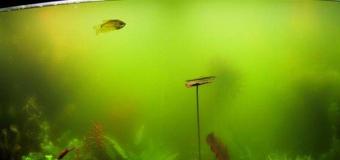 Борьба с водорослями в аквариуме