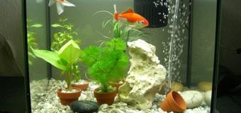 Типы фильтров для очистки воды в аквариуме