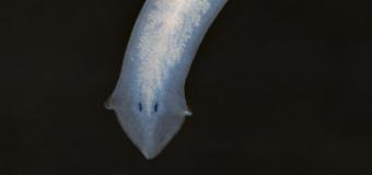 Планария в аквариуме — методы борьбы с паразитом