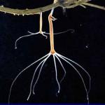 Гидра в аквариуме — способы уничтожения
