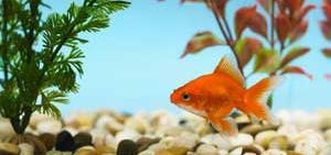 Основные принципы декорирования аквариумов