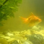 Действия при помутнении воды в аквариуме