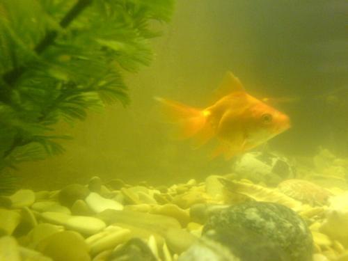 что делать если помутнела вода в аквариуме практичные советы