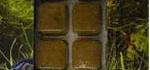 Дафния — лучший живой корм для обитателей аквариума