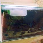 Охлаждение воды в аквариуме в летнюю жару