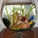 Уход за маленьким аквариумом — особенности обслуживания