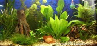 Дезинфекция и карантин аквариумных растений