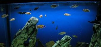 Как правильно подбирать рыбок или о совместимости рыбок