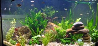 Подготовка аквариума перед отъездом в отпуск или командировку