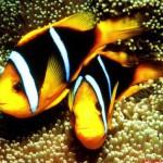 Переселение морских рыбок и беспозвоночных