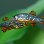 Маленькие аквариумные рыбки — подбор и уход