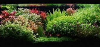 Голландский аквариум в доме