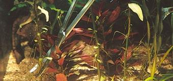 Как подстригать аквариумные растения