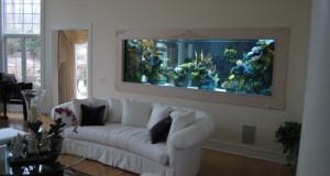 Как нужно правильно оборудовать аквариум
