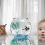 Как правильно заводить рыбок