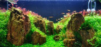 Водоросли в аквариуме: характеристики и классификация