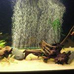 Выбираем тихий бесшумный компрессор для своего аквариума
