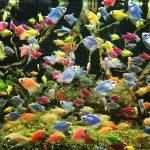Аквариумная рыбка тернеция: содержание и уход в домашних условиях