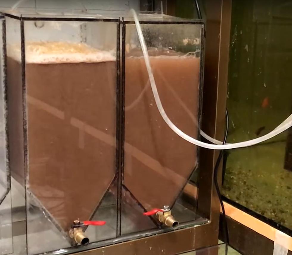 Для выращивания в аквариуме